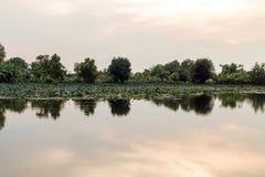美好开花在水池,百合水开花,流程的桃红色莲花 免版税库存照片