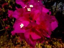 美好明亮桃红色花漂浮 库存照片