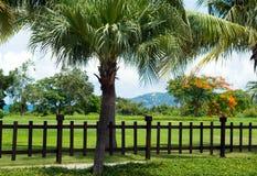 美好热带环境美化与棕榈树和花 免版税库存照片