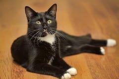 美好猫说谎 库存照片