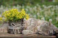 美好的一点黄色开花的花花束叫a 免版税库存图片