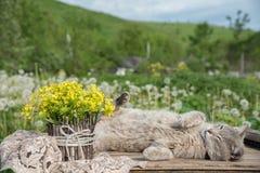 美好的一点黄色开花的花花束叫a 免版税库存照片