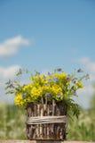 美好的一点黄色开花的花花束叫r 库存照片