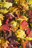 美好的下落的秋叶背景 库存图片