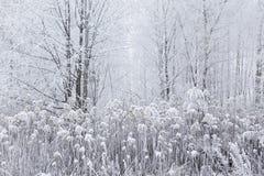 美好的不可思议的白色结冰的冬天在森林立陶宛里, EU 免版税库存照片