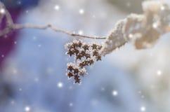 美好的与干燥植物的冬天季节性背景反对闪耀的bokeh 免版税库存照片