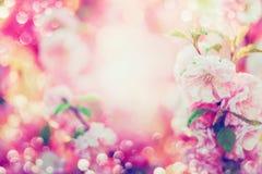美好的与桃红色开花,太阳亮光的夏天花卉背景 免版税库存照片
