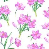 美好的与番红花的春天无缝的样式 番红花桃红色花在白色背景的 水彩 库存例证