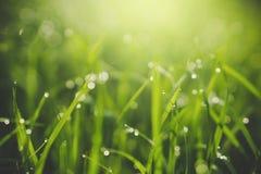 美好的与雨珠的自然绿草与早晨阳光 免版税库存照片