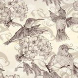 美好的与humingbirds的传染媒介无缝的墙纸在葡萄酒 免版税库存图片