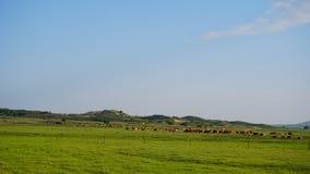 美好的中国内在蒙古人 库存图片
