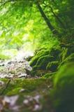 美好的乡下绿色 在一条河的瀑布有大岩石的和落叶林绿化风景 免版税库存照片