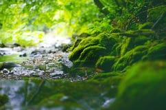 美好的乡下绿色 在一条河的瀑布有大岩石的和落叶林绿化风景 库存图片
