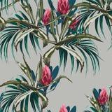 美好的传染媒介花卉无缝的样式背景用龙舌兰和普罗梯亚木开花 库存例证