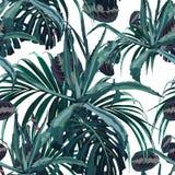 美好的传染媒介花卉无缝的样式背景用龙舌兰和热带棕榈叶 库存例证