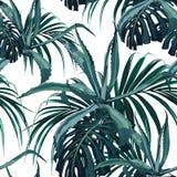 美好的传染媒介花卉无缝的样式背景用龙舌兰和热带棕榈monstera离开 皇族释放例证