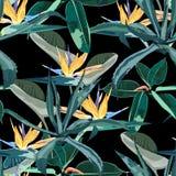 美好的传染媒介花卉无缝的样式背景用龙舌兰和鹤望兰 向量例证