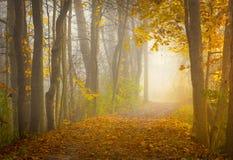 美好的俄亥俄日出在森林里 免版税库存照片