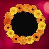 美好的假日圈子花卉照片框架 免版税库存图片