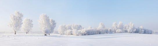 美好的全景冬天 免版税库存照片