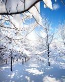 美好的公园冬天 免版税库存照片