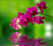 美好的兰花和水表面 库存照片