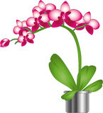 美好的兰花粉红色 图库摄影