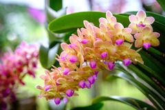 美好的兰花花和绿色叶子背景在加尔德角 免版税图库摄影