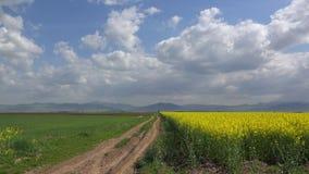 美好的农业风景,其次胡同黄色强奸领域,在蓝色平静的天空的白色蓬松云彩 股票视频