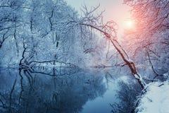 美好的冬天在河的森林里日落的 库存照片