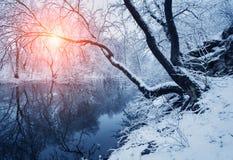 美好的冬天在河的森林里日落的 库存图片
