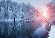 美好的冬天在河的森林里日落的 图库摄影