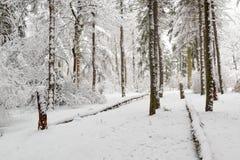 美好的冬天场面在一个老公园 图库摄影