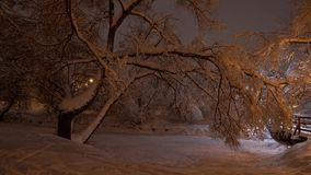 美好的冬天场面在公园 免版税库存图片