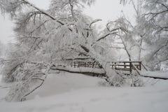 美好的冬天场面在公园 免版税库存照片