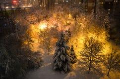 美好的冬天夜在公园 免版税库存照片