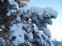美好的冬天季节 库存照片