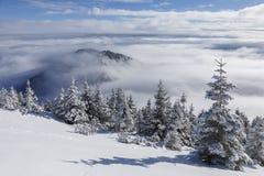美好的冬天山风景在喀尔巴汗,罗马尼亚 在云彩上,云彩海  免版税库存图片