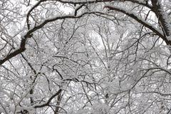 美好的冬天森林风景,树包括雪 图库摄影