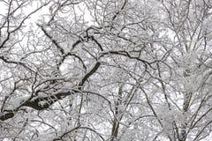 美好的冬天森林风景,树包括雪 免版税库存图片
