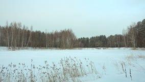 美好的冬天风景、森林湖和雪 股票视频