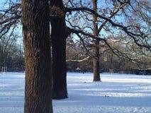 美好的冬天风景在有积雪的地面、树、天空蔚蓝和太阳光的柏林公园Hasenheide 免版税库存图片
