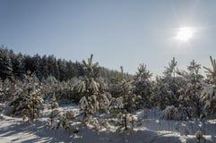 美好的冬天风景在森林里 库存照片