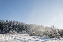 美好的冬天风景在森林里 免版税库存图片