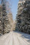 美好的冬天风景在森林里 图库摄影