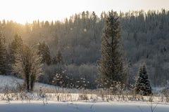 美好的冬天风景,在雪的树 日出在冬天森林里 图库摄影