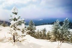 美好的冬天风景 免版税图库摄影