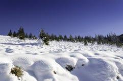 美好的冬天风景 免版税库存照片