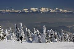 美好的冬天风景 库存照片
