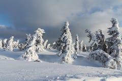 美好的冬天风景Krkonos在一个晴天 Krkonose山的冬天土坎 用霜盖的树 图库摄影